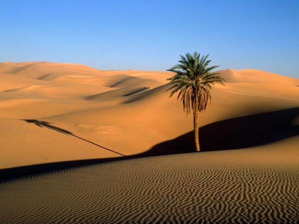 algeria dst trsm