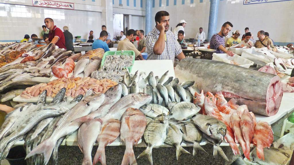 Morocco Top African Fish Producing Country