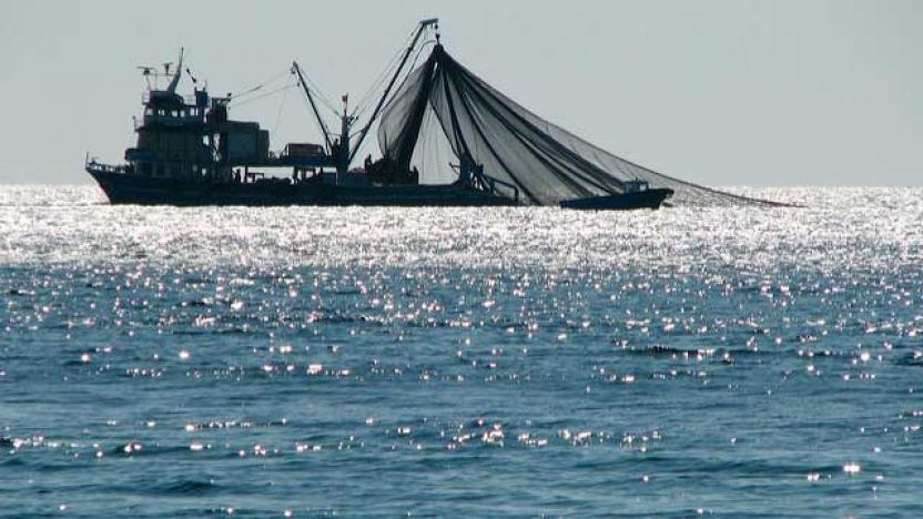 Morocco Warns of Fish Stock Depletion in Mediterranean Due ...