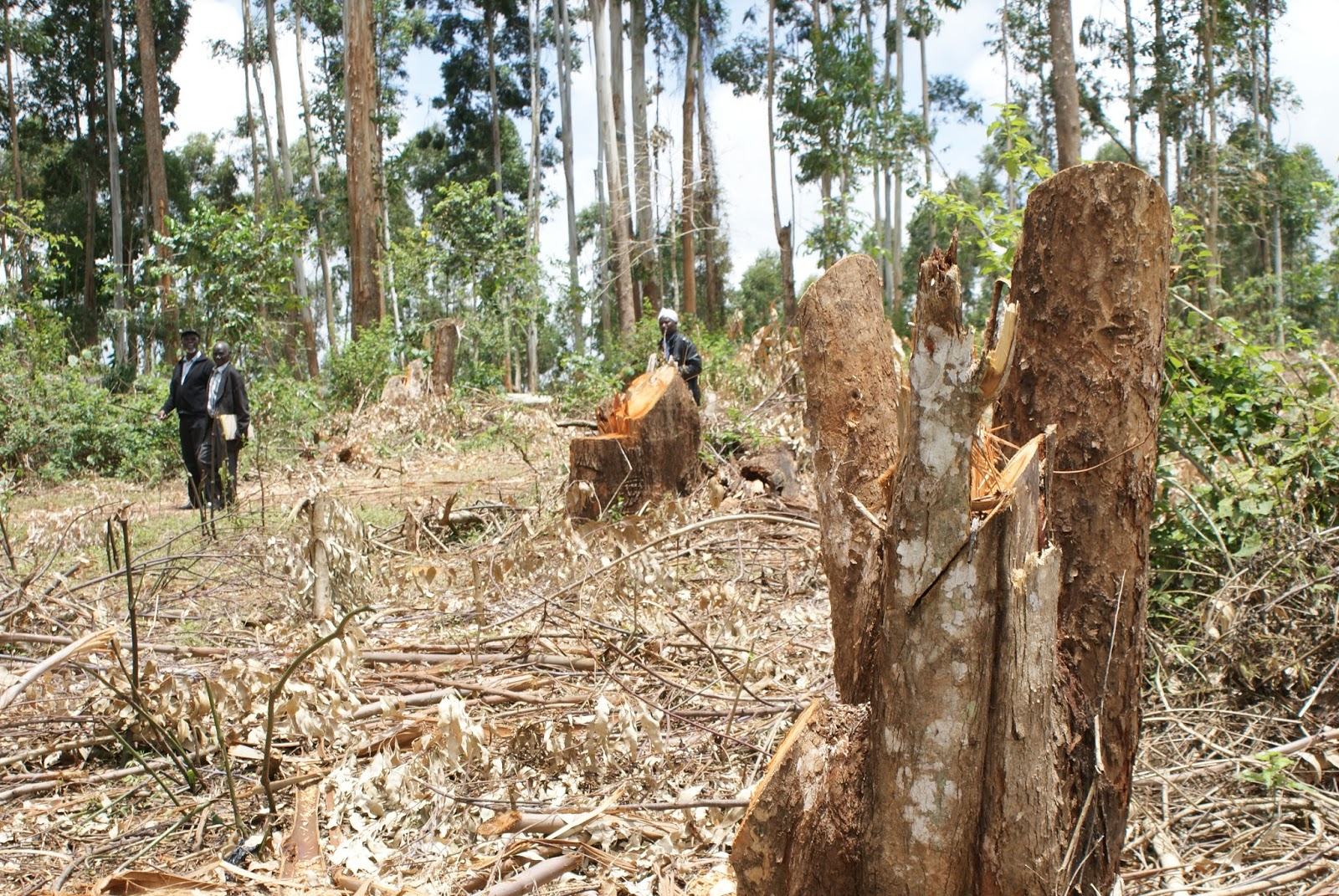 Kenya pledges to achieve over 10pc forest cover by 2022